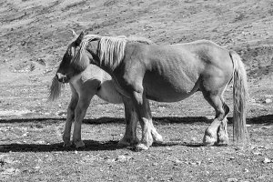 little mare with her mother