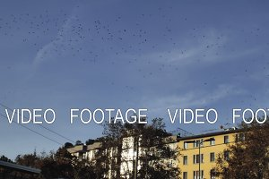 flock of birds flying in autumn city
