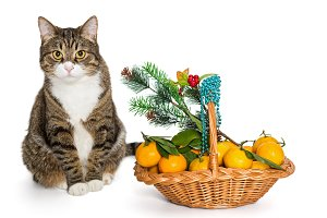 Gray cat Christmas basket