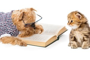 Dog reading a book little kitten