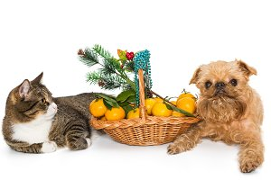 Cat, dog and Christmas basket