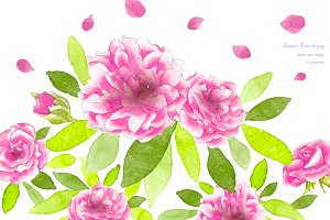 Pink Roses Watercolor Flowers CL59