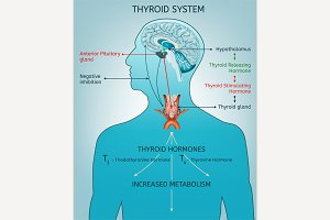 Thyroid System Poster