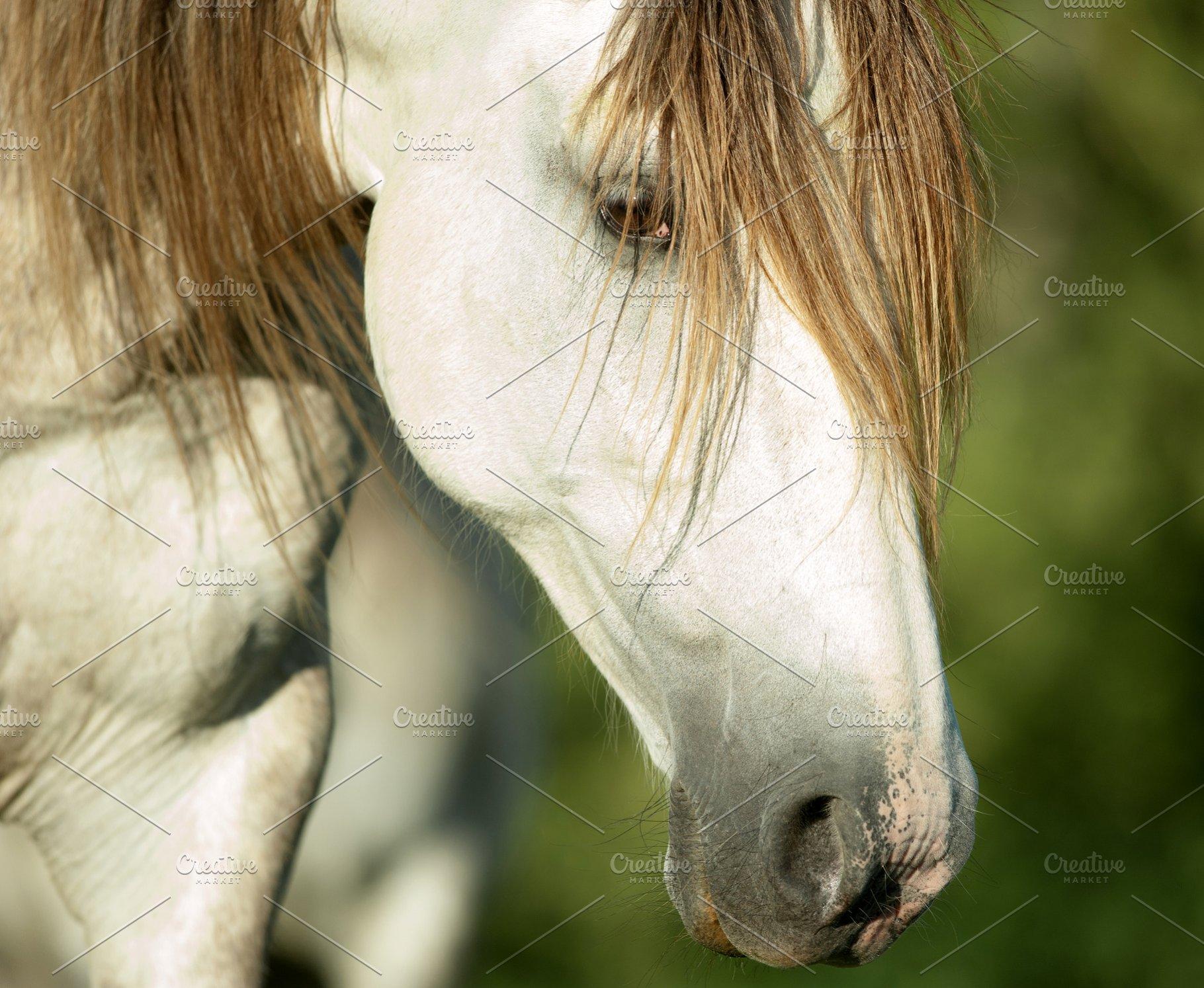 Save white horse head closeup