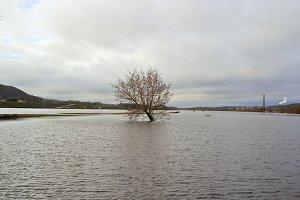 Flooded river bank