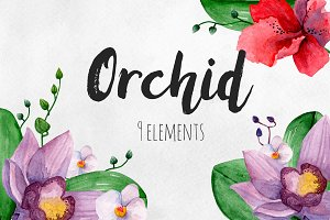 Watercolor orchid. Flowers clip art