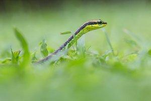 snake, animal, nature,