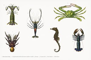 Illustration of aquatic life