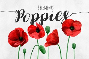 Poppies. Watercolor red flowers