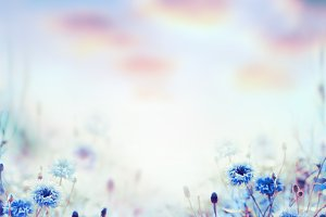 Nature background with cornflowers