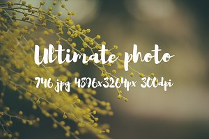 Ultimate Photo Pack