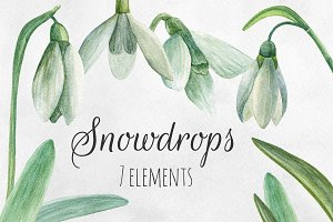 Watercolor snowdrops Flowers clipart