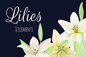 Watercolor lilies. Flowers clip art