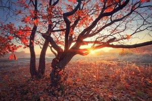 Autumn sunny scene