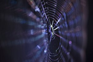 Macro of a spiders web