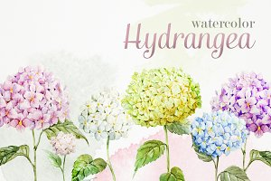 Watercolor Vector Set