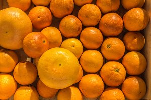 Oranges / Grapefruits