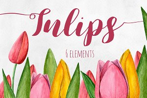 Watercolor tulips. Flowers clip art