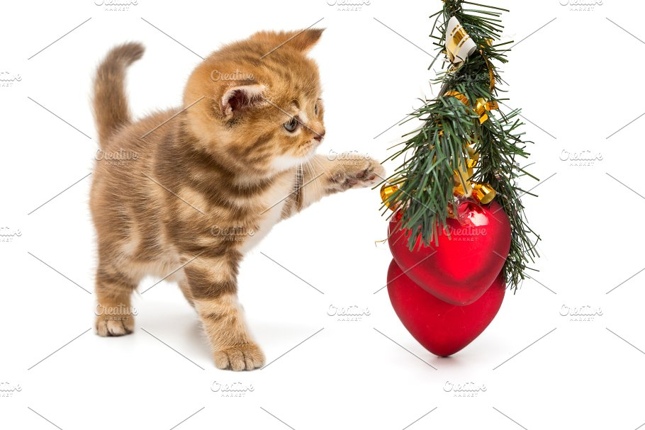 Small British kitten and Christmas ~ Animal Photos ~ Creative Market