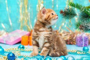 Small  kitten and Christmas decorati