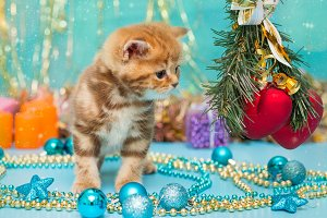 Small  kitten and Christmas
