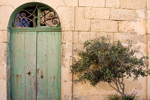 Old Door And Tree