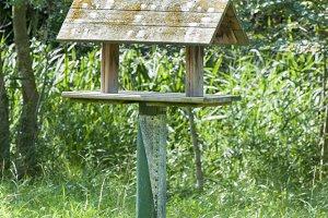 feeder birds