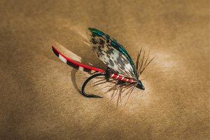 Macro shot of a wet fly fishing , Calder