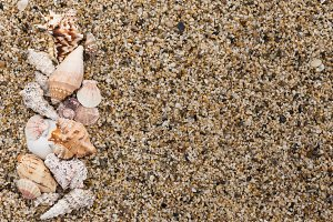 Seashells on located on small pebble