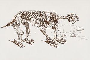 Megatherium skeletons (PSD)