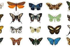 Illustration of Butterflies(PSD)