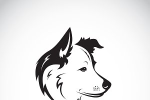 Vector of a border collie dog. Pet.