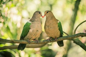Two colourful doves resting outside