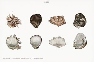 Seashells illustration (PSD)