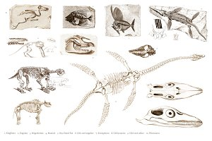 Different types of ancient fossils