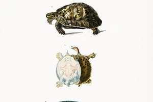 Different types of turtles