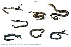 Different types of snakes
