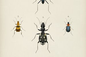 Different types of beetles