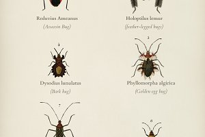 Different types of bugs