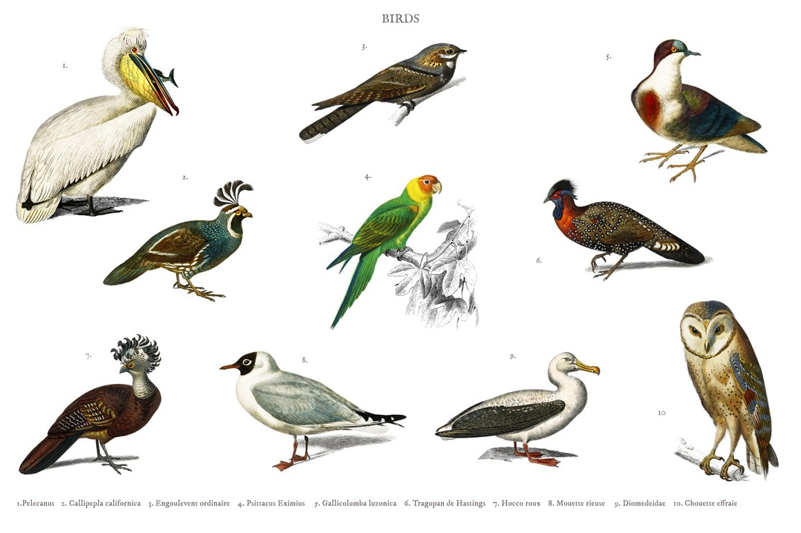 Different types of birds (PSD) | High-Quality Animal Stock Photos ~ Creative  Market
