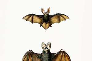 Illustration of bat (PSD)