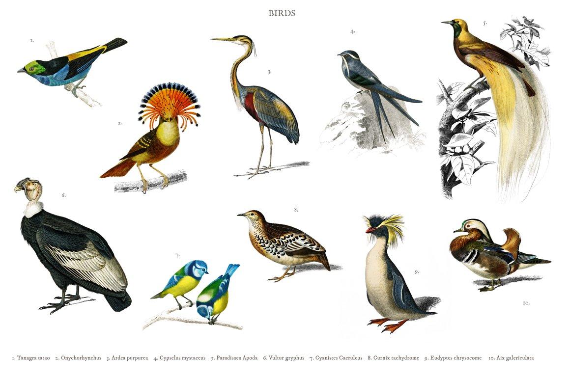 Different Types Of Birds Psd Animal Photos Creative