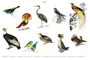 Different types of birds (PSD)