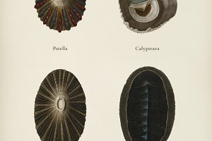 Different types of mollusks
