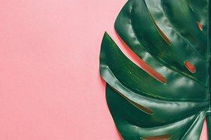 Half of  tropical green leaf