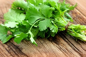Bunch of fresh coriander or cilantro