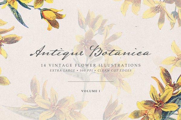 Vintage Flowers Vol.01 - Extra Larg…