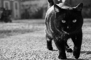 black cat moving
