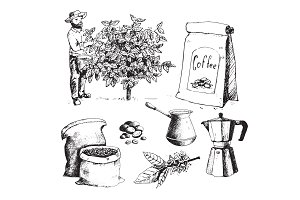 Coffee production hand drawn farmer picking beans on tree and vintage drawing drink retro cafe collection sketch dessert vector illustration.