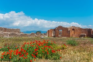Poppies in ancient Pompeii, Italy.